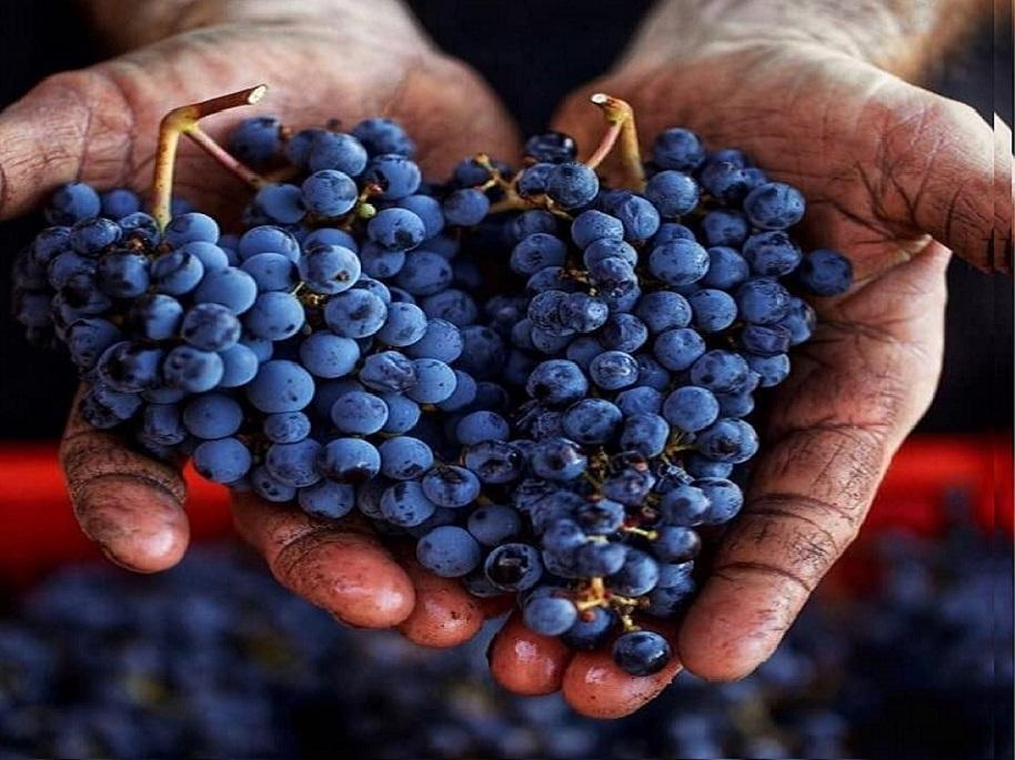 Weinreisen Bulgarien