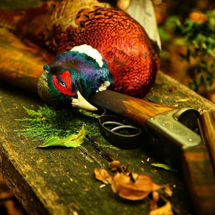 Jagd Borovets