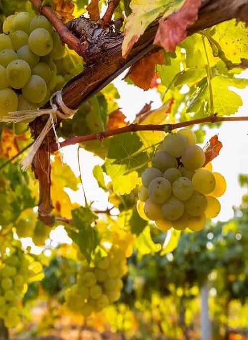 DiVes Winery Weinverkostung _04