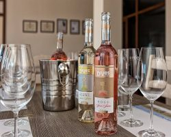DiVes Winery Weinverkostung _06